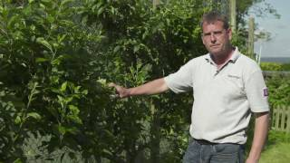 Explainer video -  Pruning Your Fruit Trees