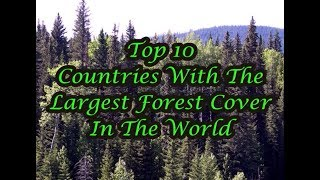 Top 10 Countries With The Largest Forest Cover In The World