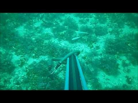 Dive Gulf of Mexico Spear Fishing Hogfish and a Big Lobster May 2011