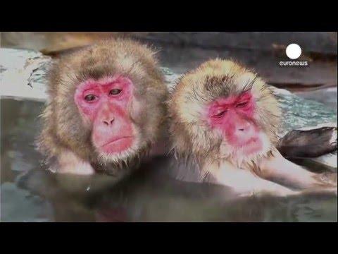 極寒の中でのお風呂に至福の表情の動物たち