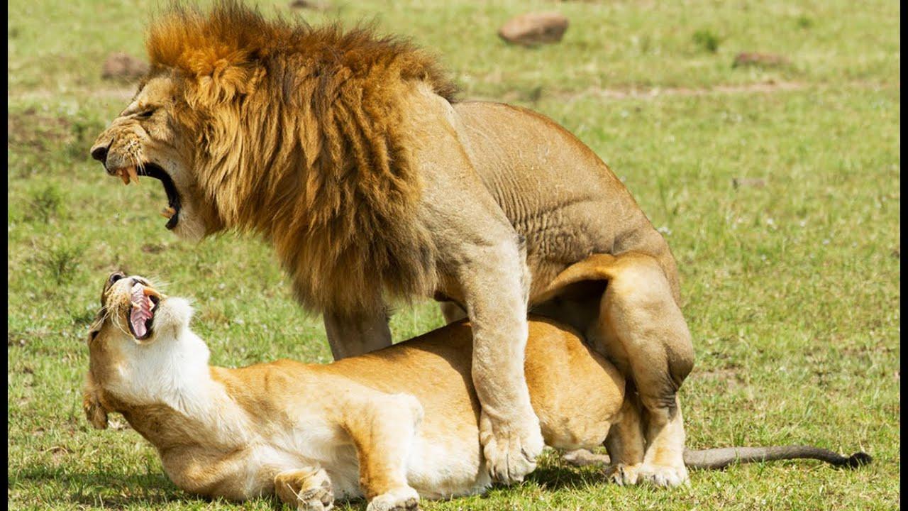 Дом секса для льва