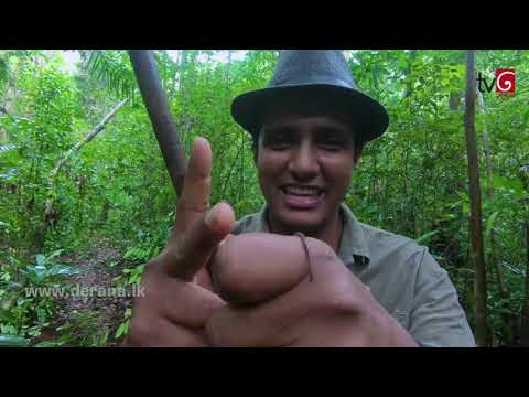 Travel With Chatura @ Kuruwita Delgamu Rajamaha Viharaya ( 01-09-2018 )