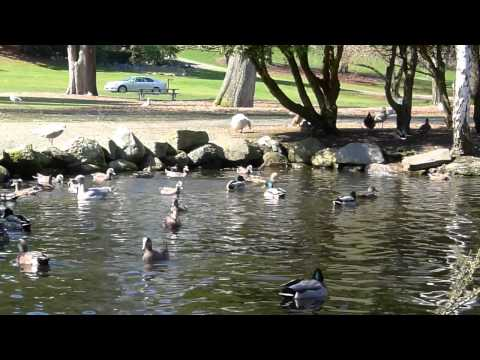 Ducks and Gulls Share a Pond