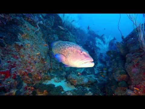 Back to Basics Adventures - Diving Atlantis Reef - Ponta do Ouro - Mozambique