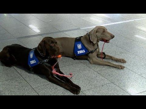 Schmuggel am Frankfurter Flughafen