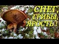Поход за грибами октябрь 2018 Грибы под снегом Тихая охота Пермский край Поиски грибов mp3