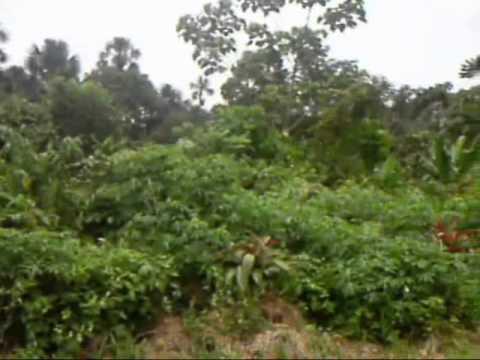 Living with Shiwiar tribe Amazon