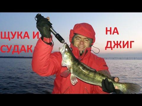 сезон для ловли судака на джиг