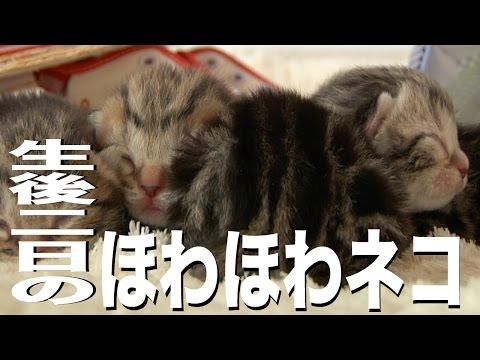 生後二日のほわほわ子猫1