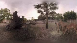 Nyalas Enjoy Breakfast in 360°
