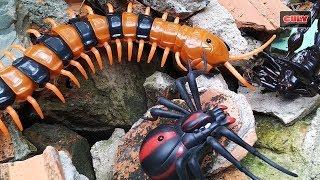 Centipede Toy Remote Control