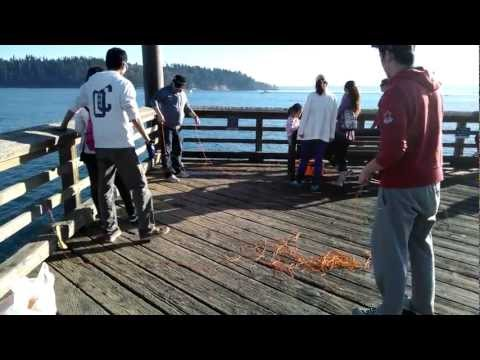 Dungeness Crabbing, Catching, Cooking How To in Ambleside Park - Vancouver, BC, Canada