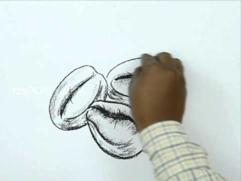 Coffee Bean Drawing How to Draw a Coffee Bean
