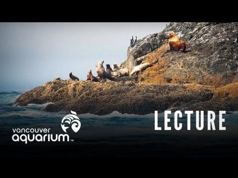 Introduction To Marine Life Course: Seals and Sea Lions