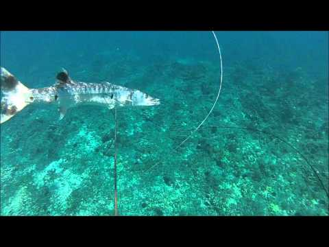 SPEARFISHING GREAT BARRACUDA (KAKU) klip izle