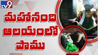 Snake creates panic inside Devi temple in Kurnool