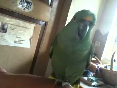 Sexual violence andrea parrot nina cummings