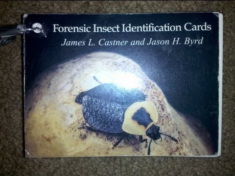 Unit 6 Forensic Insect Cards