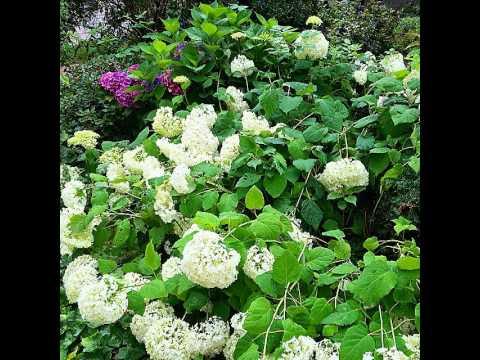 #jardín #plantas #flores #naturaleza #garden #plant #flowers #nature #gardenlovers #flowerlovers #