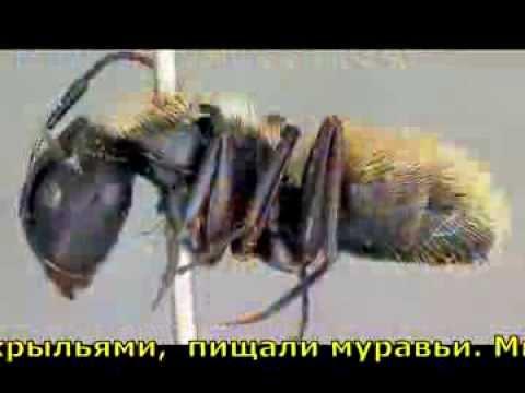 Высоцкий Владимир - Гербарий