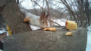 squirrel and bird eating nuts))