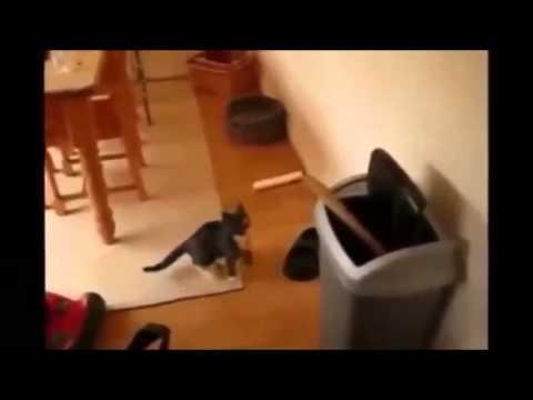 Gatos Chistes Videos De Risa