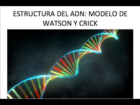 watson-crick research paper Although minor changes have resulted in the alteration of the watson-crick dna model through the watson-crick model buy a research paper online now.