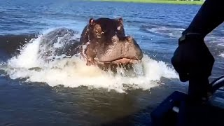 Download HIPPO - Attacks and Funny Moments - Compilation 3Gp Mp4