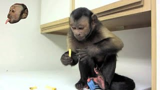 Monkey LOVES French Fries!