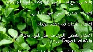 الاعشاب والنباتات -الجرجير