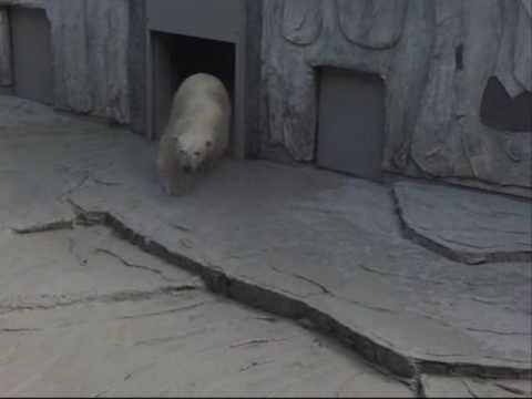 届きませんって・・・(静岡日本平動物園のロッシー)