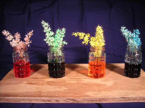 Color Flowers With Food Coloring Flowers And Food Color Time