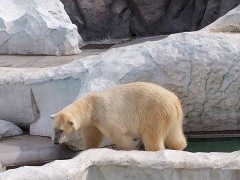 上野動物園(UENO ZOO)