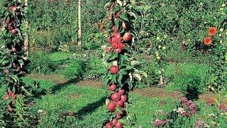 Play planter un pied de raisin de table en treille - Planter vigne raisin de table ...
