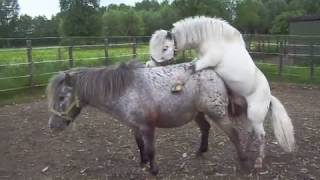 The Rare Horse Breed Is Bred To Preserve