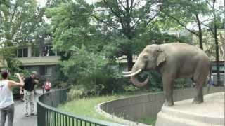අලියාට තරහා ගිහින් මෙයාට කරන වැඩේ බලන්නකෝ..!!  Elephant Spraying Poo on Man - ORIGINAL at Berlin Zoo