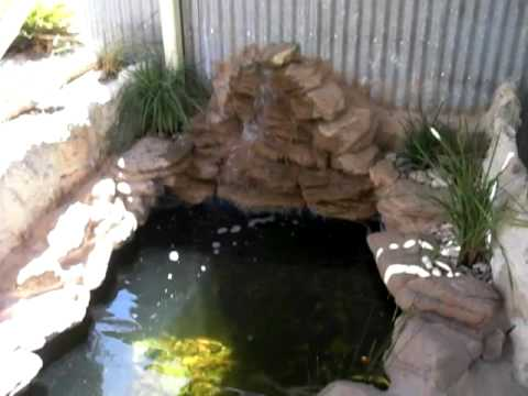TURTLE POND Video