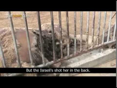 IDF Killing of Animals in Gaza Zoo