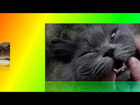 Самые смешные кошки 2017 Приколы с кошками. для детей, Прикольное видео о животных