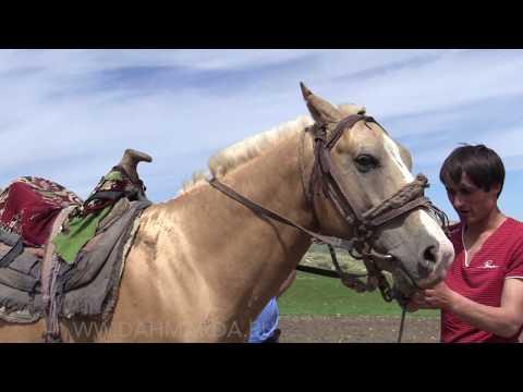 Лошадь таджикской породы в хозяйстве Ходжи Сафара и Ходжи Махмуда