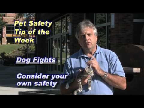 Kootenai Humane Society Pet Health Tip of Week 9-25-09 Dog Fight