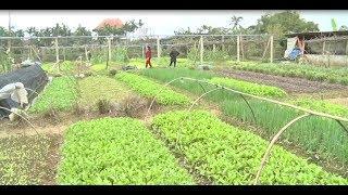 Hiệu quả kinh tế nhìn từ mô hình sản xuất rau sạch hữu cơ
