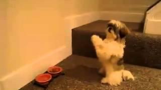 Praying Dog Before Eating