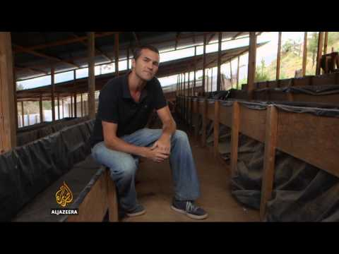 Guatemala women use worms to combat poverty