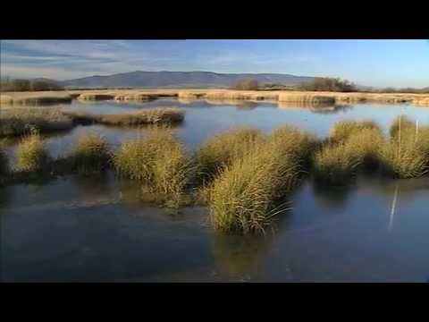 Wild Spain: Tablas de Daimiel (Castilla La-Manch) Part 1