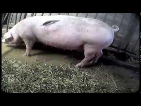Injuries | Harling Farm