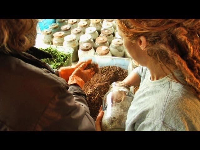 A Glimpse Inside a Wild and Cultivated Organic Mushroom Farm