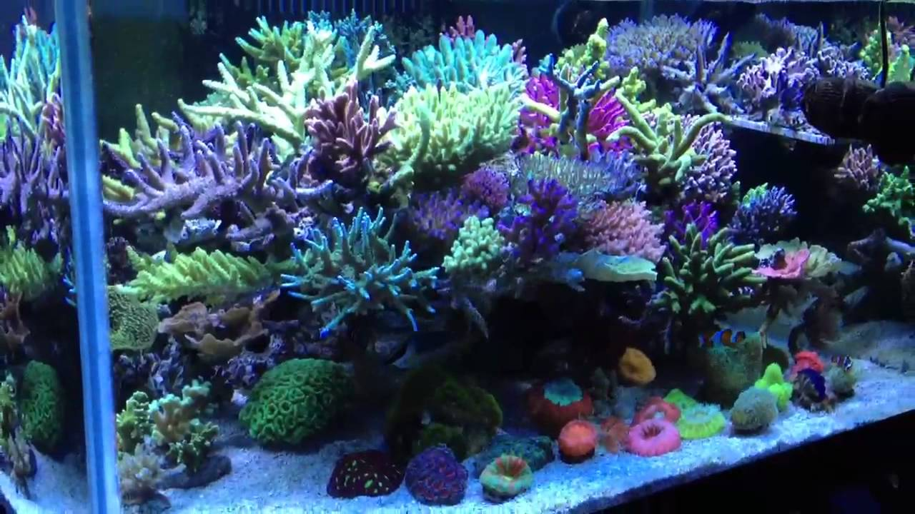 Reef Sps Tank Youtube