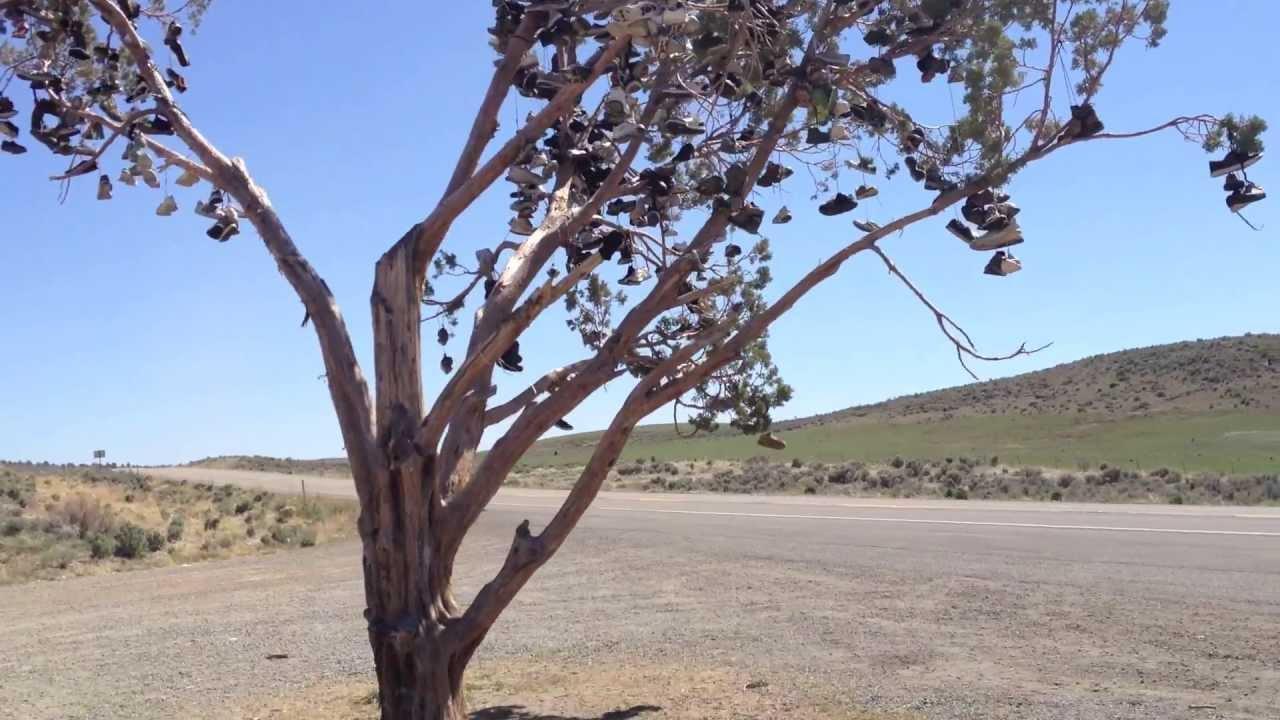 Tree Shoes Nevada Shoe Tree California Highway