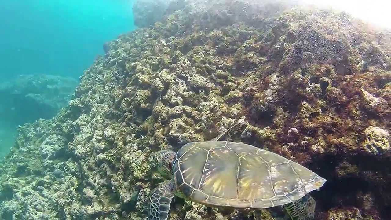 Snorkeling at three tables north shore oahu with gopro for Shore fishing oahu